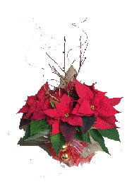 Poinsettias Decorated 6